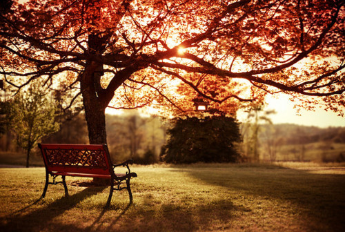 autumn,bench,photography,pretty,scenery-0d62d1a2747fef234950cfe4b98e9703_h